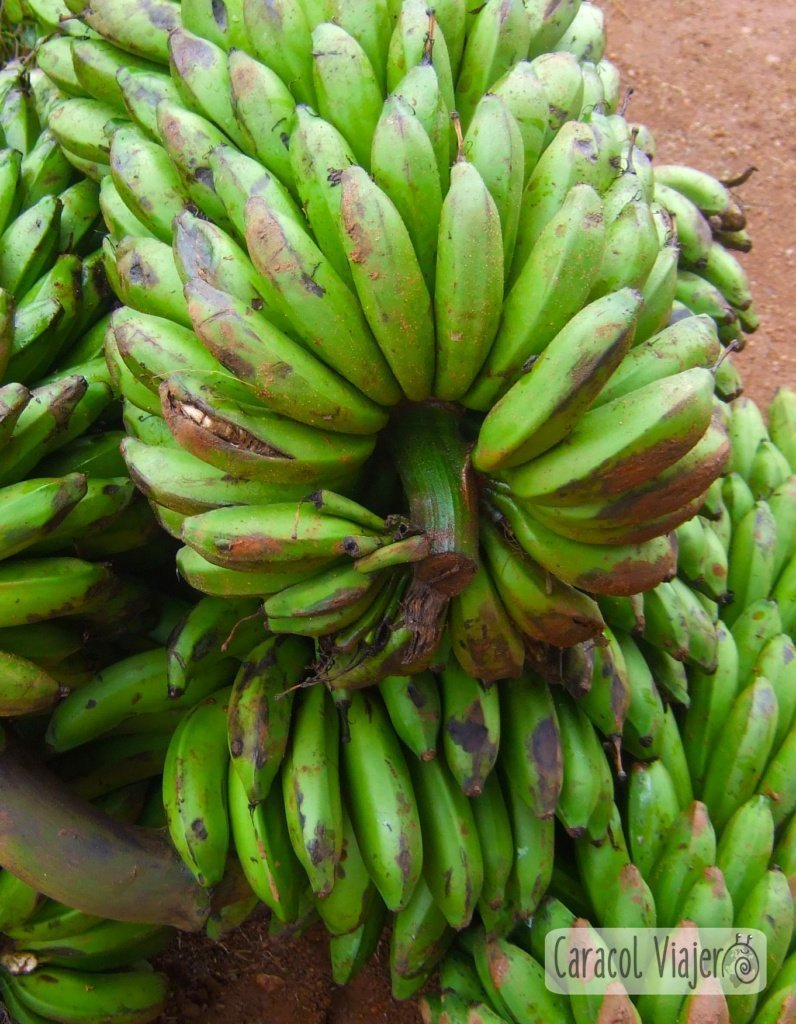 Matoke plato ugandés