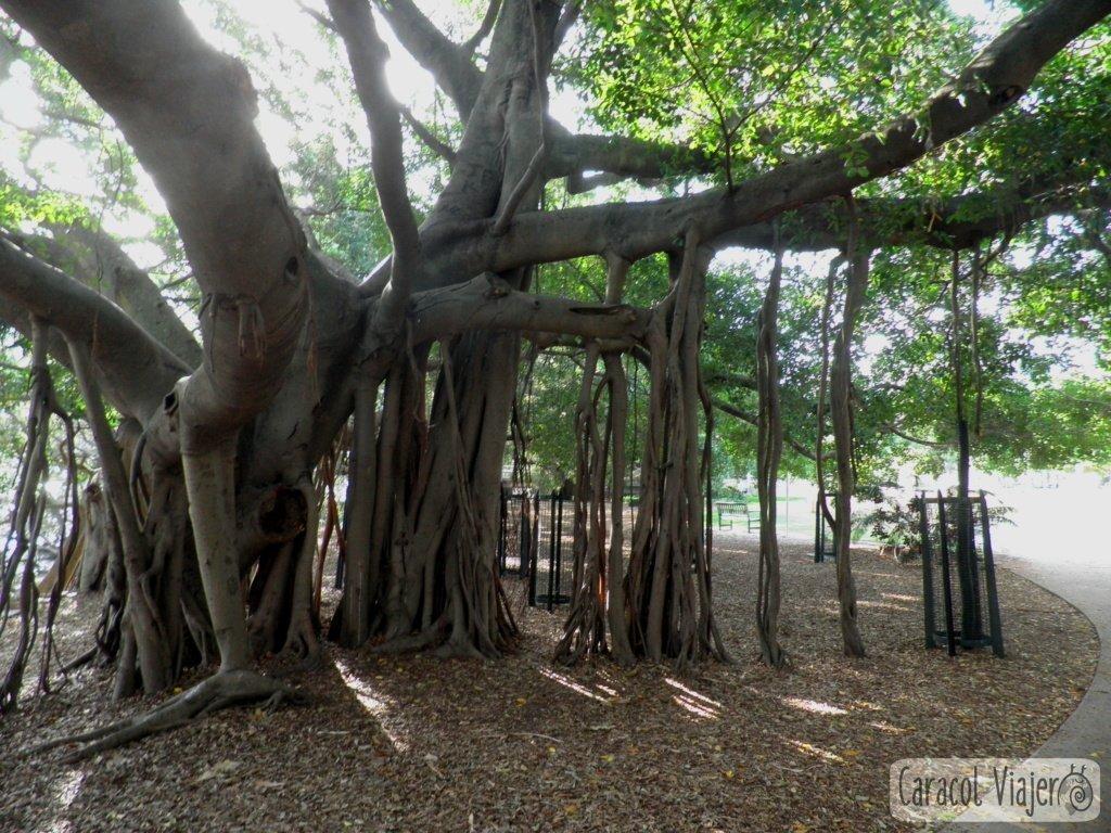 Jardínes botánicos-actividades-Brisbane