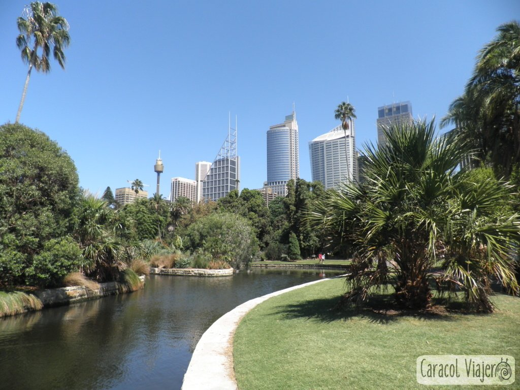 Jardines-botánicos-Sydney