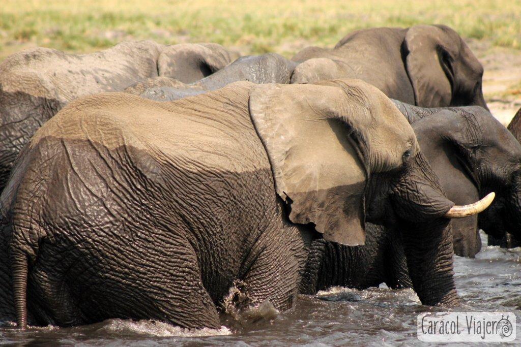 atracciones-naturales-río Chobe-elefantes-Botsuana