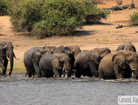 Atractivos naturales de Botsuana