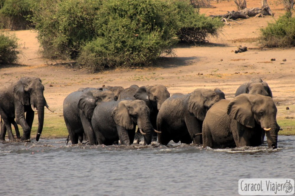 qué ver en Botsuana