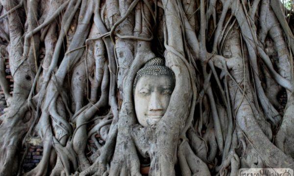 ¿Merece la pena ir a las ruinas de Ayutthaya?