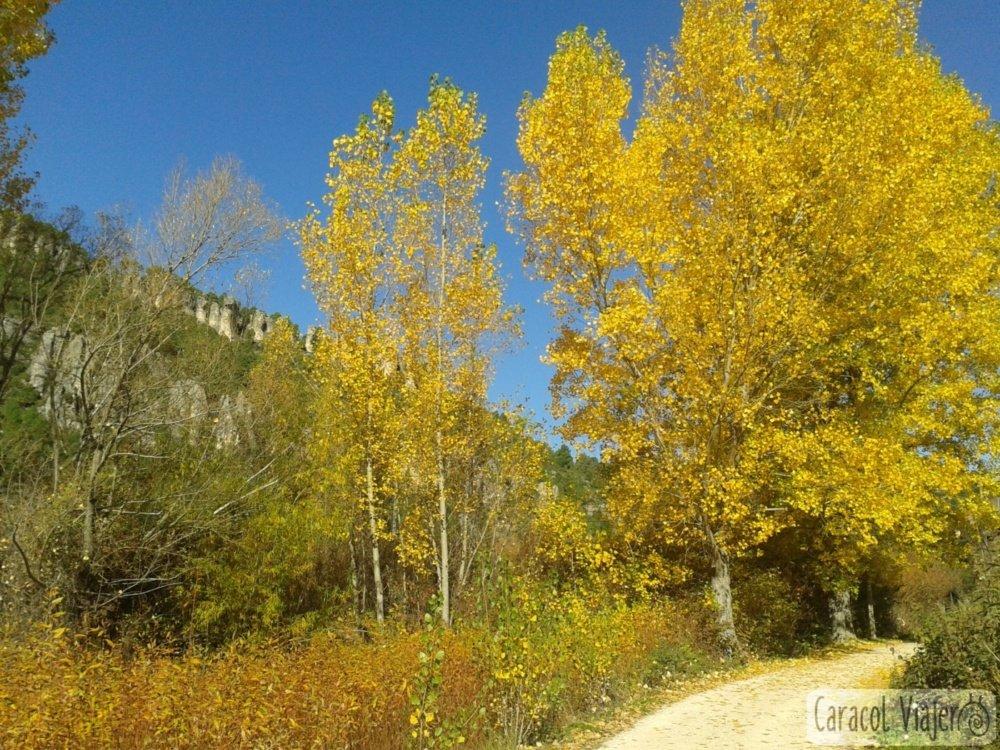 Otoño en Cañizares