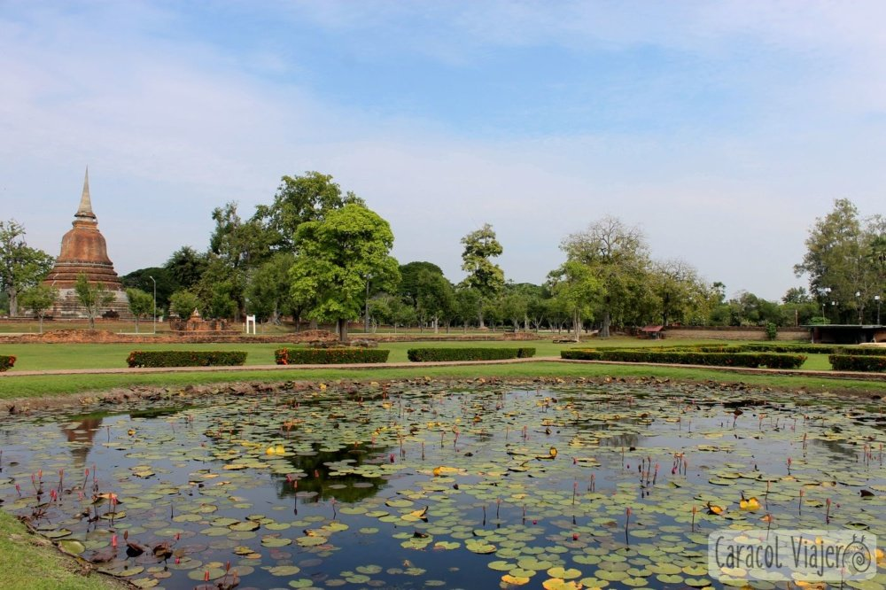 Estanque de nenúfares en Wat Mahathat, Sukhothai. Tailandia.