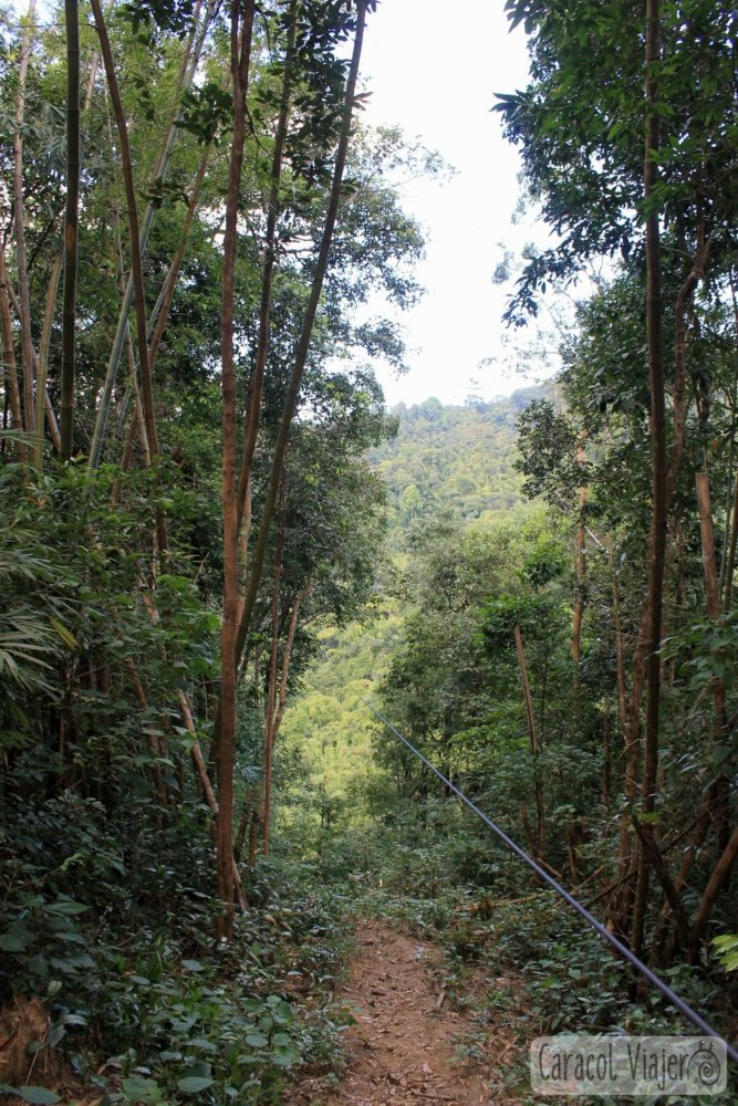 Tirolina The Gibbon Experience