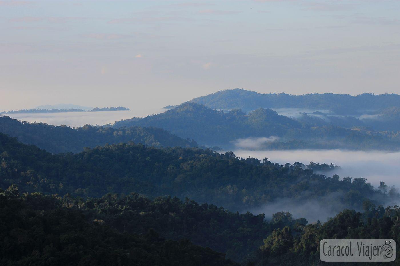 amanecer en casa-árbol The Gibbon Experience. Laos