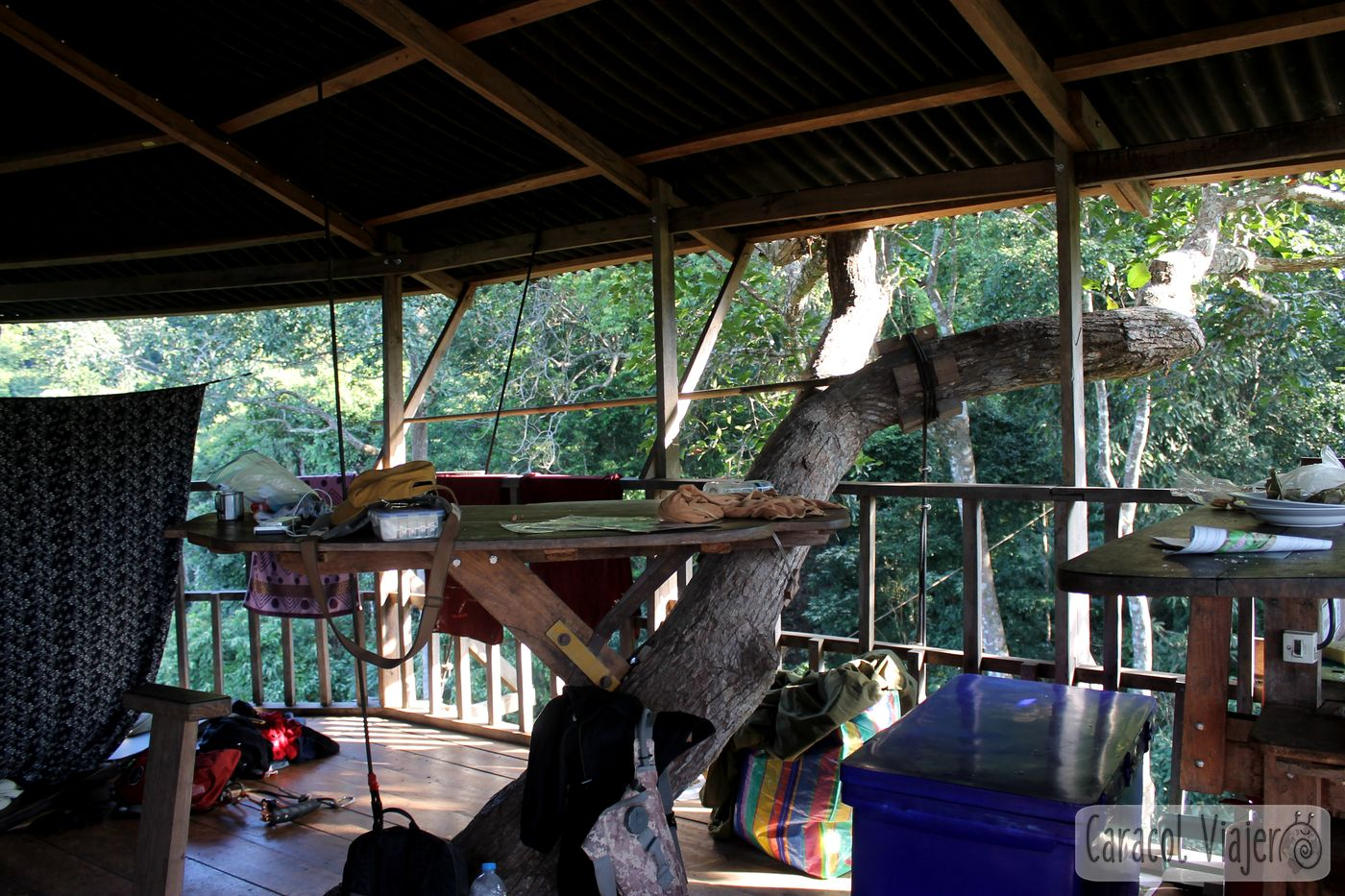 Zona común The Gibbon Experience