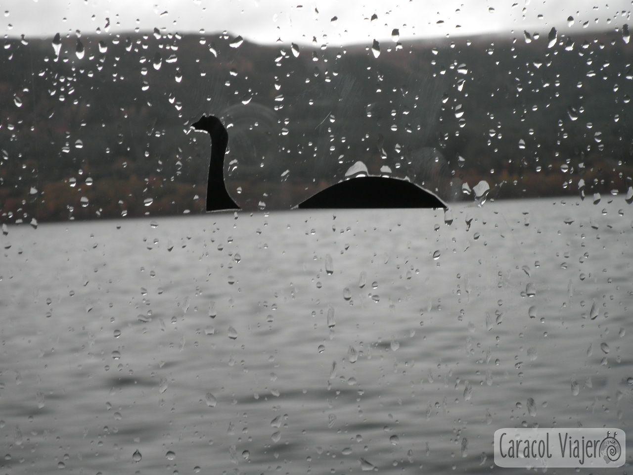 Nessie en el crucero