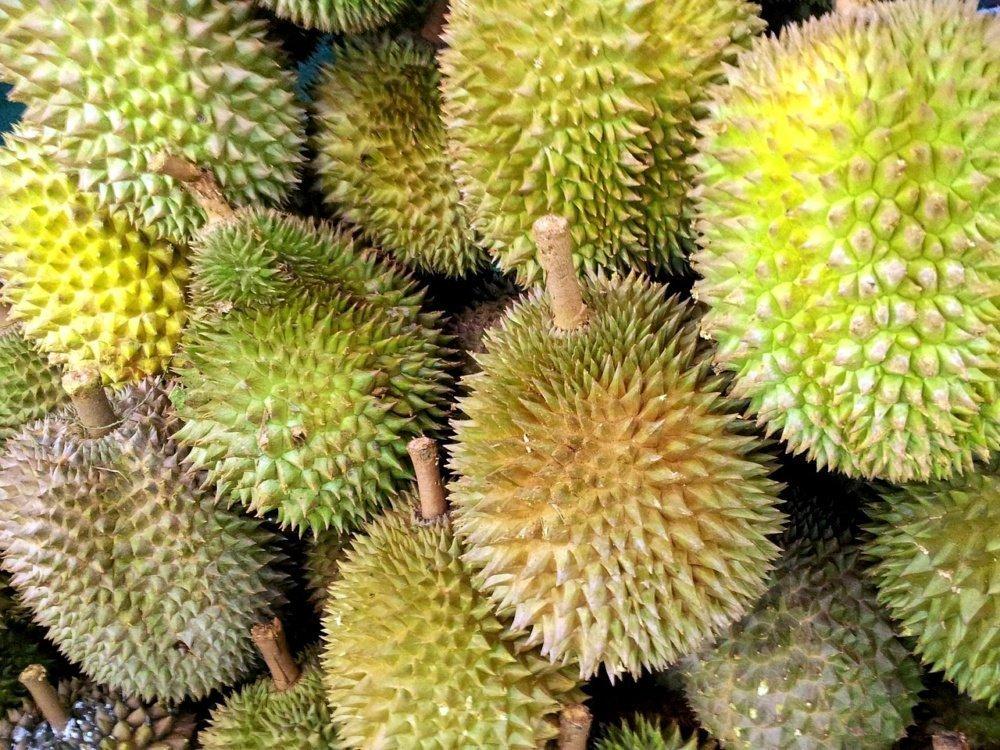 Durián exterior fruta asiática