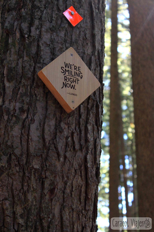 Cartel árbol Grouse Mountain
