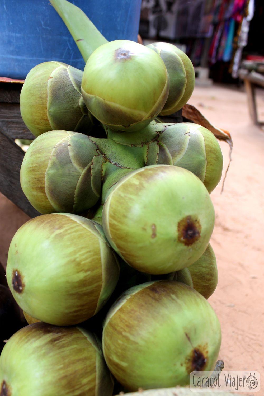 Fruto azúcar palma en Camboya