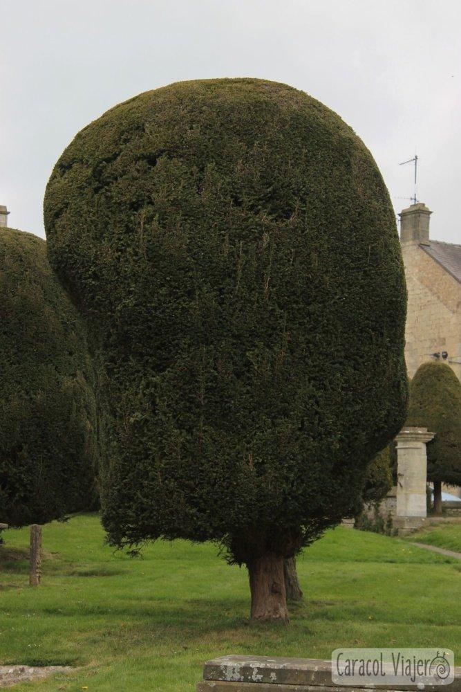 Árbol iglesia Painswick - ruta al castillo de Sudeley