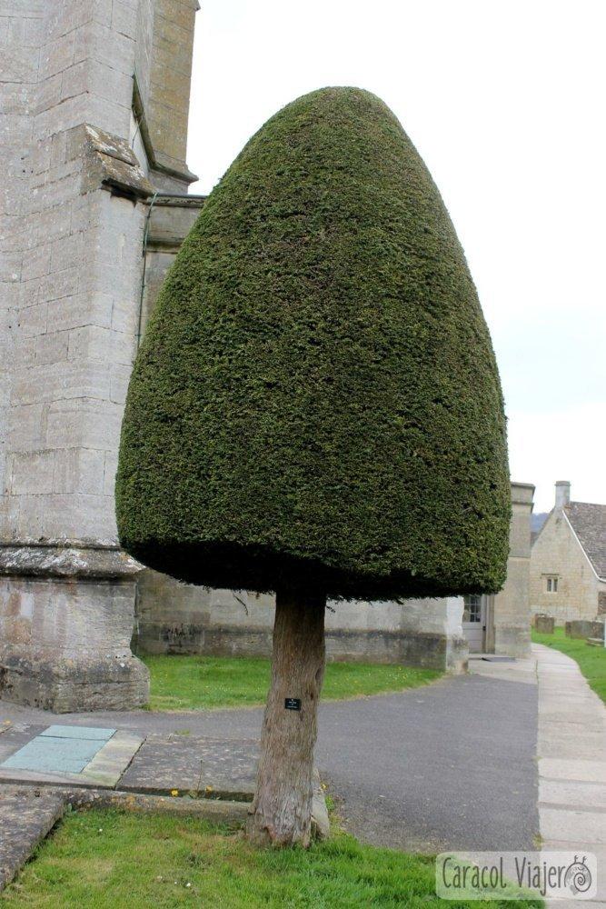 Formas árboles 200 años