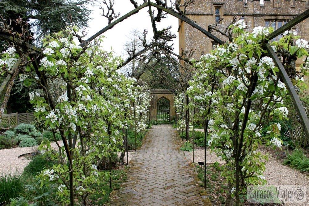 Hierbas y plantas medicinales Tudor