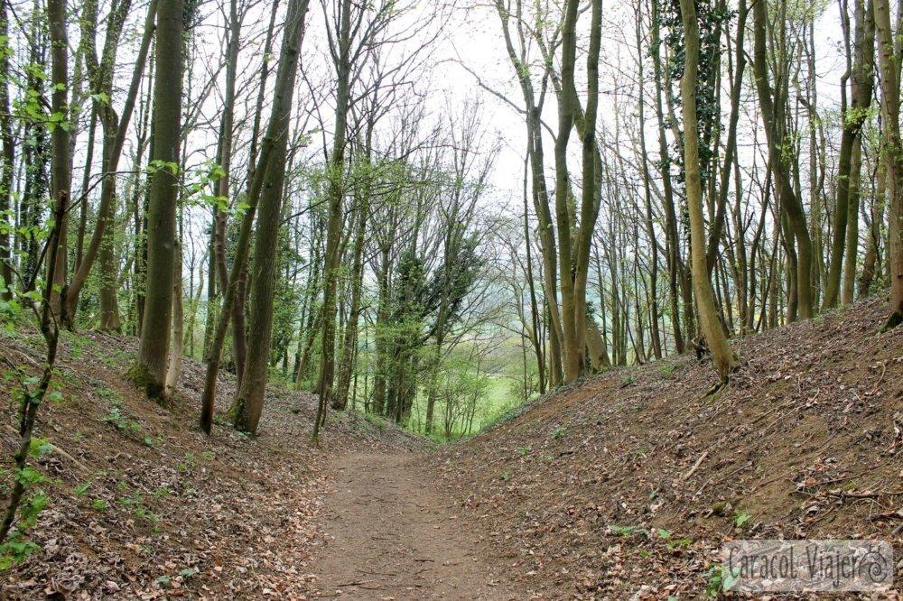 Bosque en Belas Knap Inglaterra