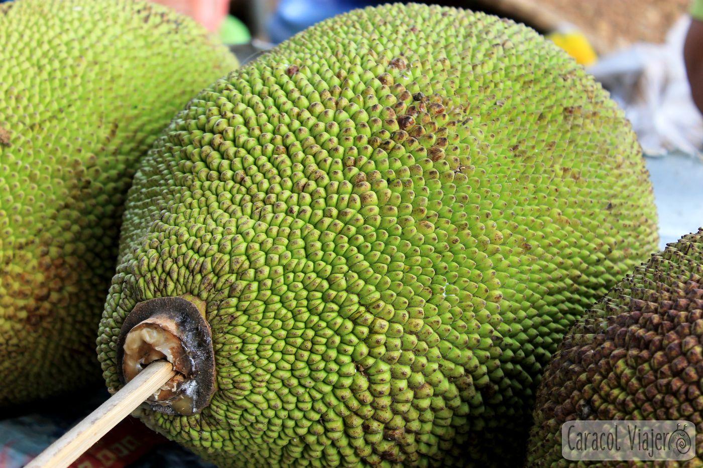 Yaca - jackfruit