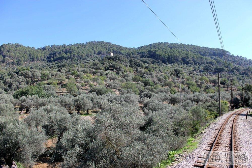 Tren de Sóller vistas