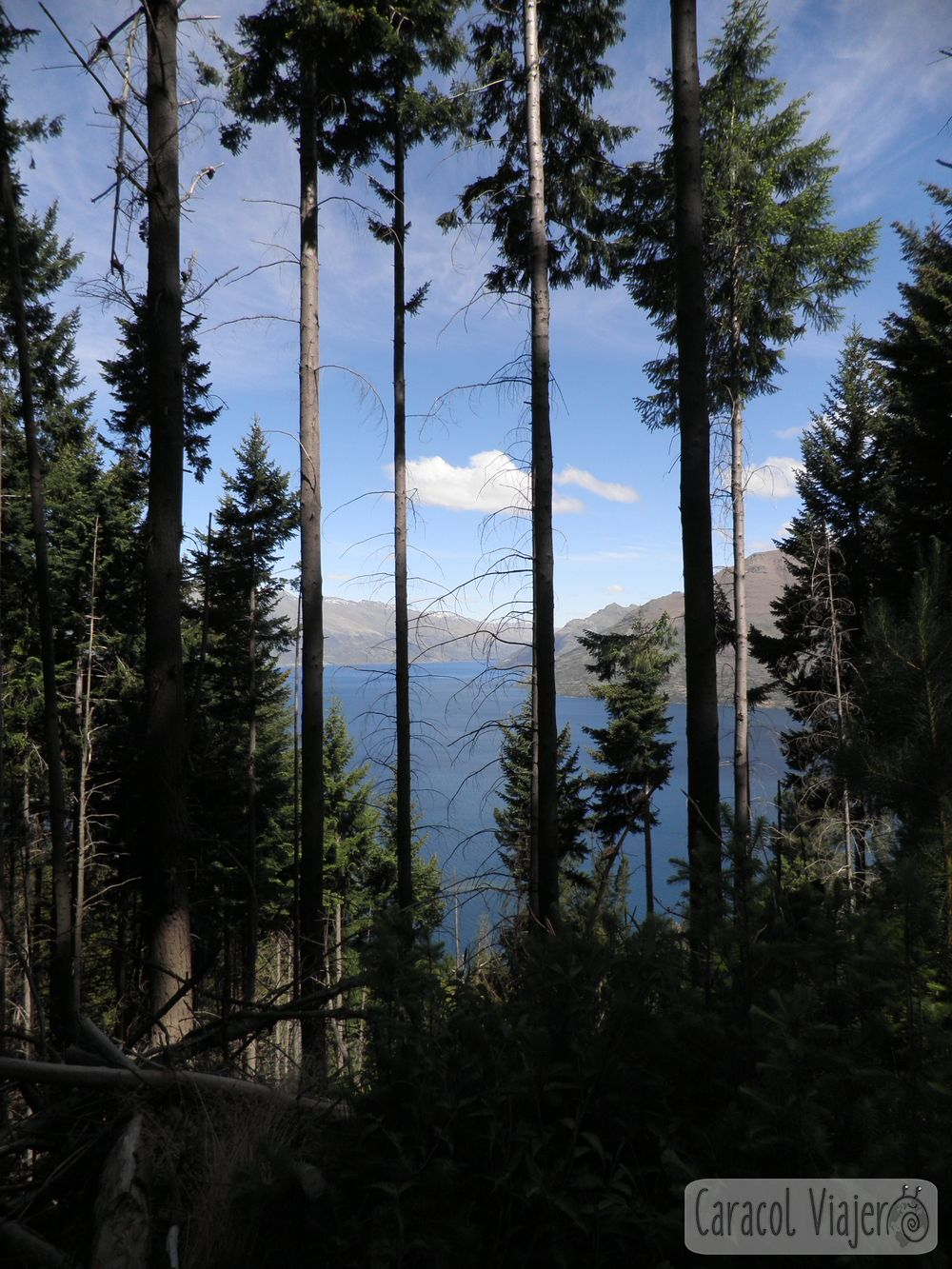 Vistas de la subida a Bob's Peak