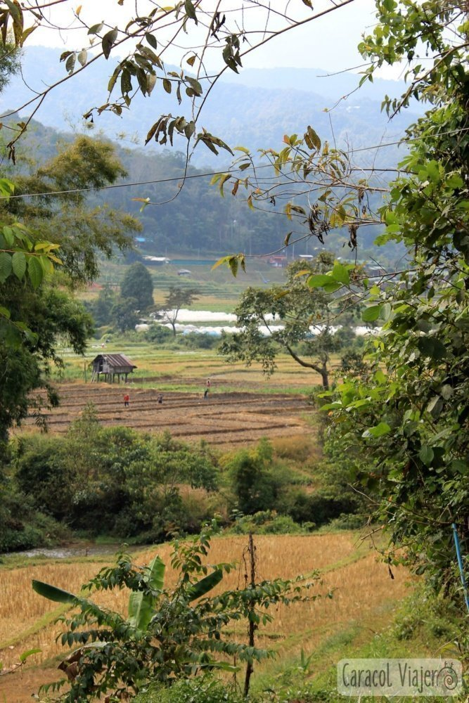 Excursión a Doi Inthanon