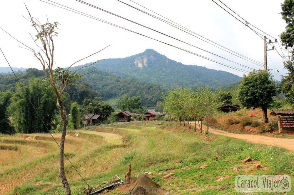 Angha Forest Doi Inthanon