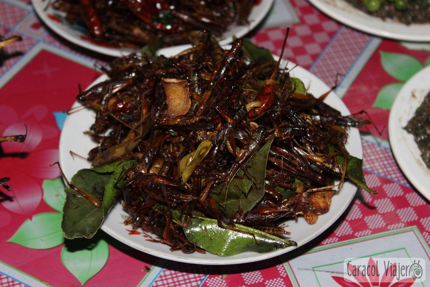 Grillos mercado de Luang Namtha