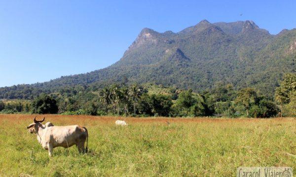 Norte de Tailandia: Chiang Dao | Qué visitar