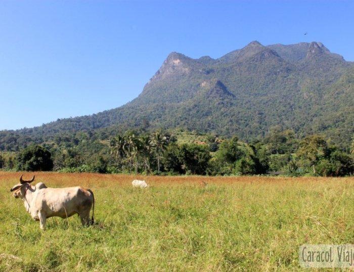 Chiang Dao, un oasis en el Norte de Tailandia