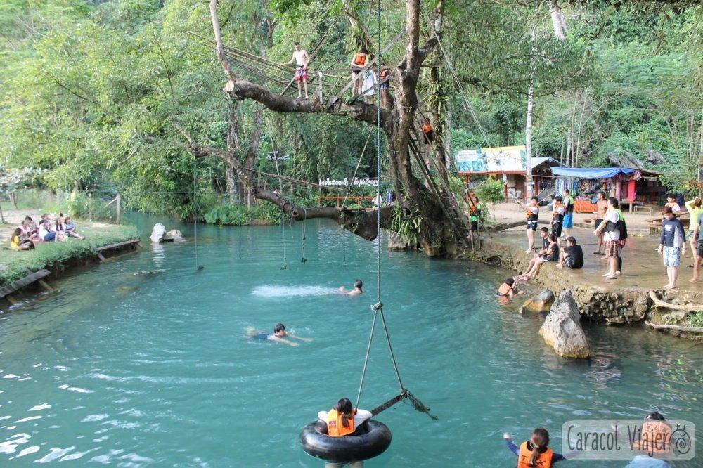 Blue Lagoon árbol