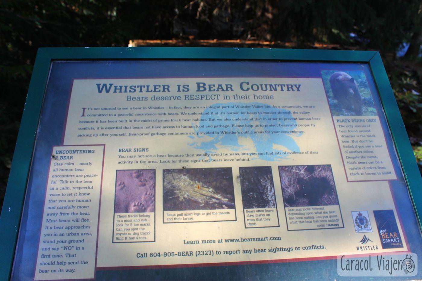 Canadá hogar de osos