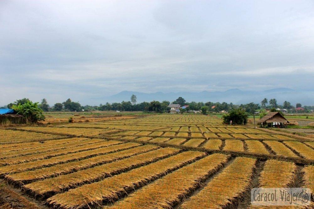 Campos arroz secos de camino a las aguas termales de Fang