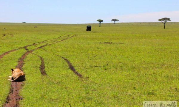 Un recorrido excepcional por la sabana africana: Masái Mara