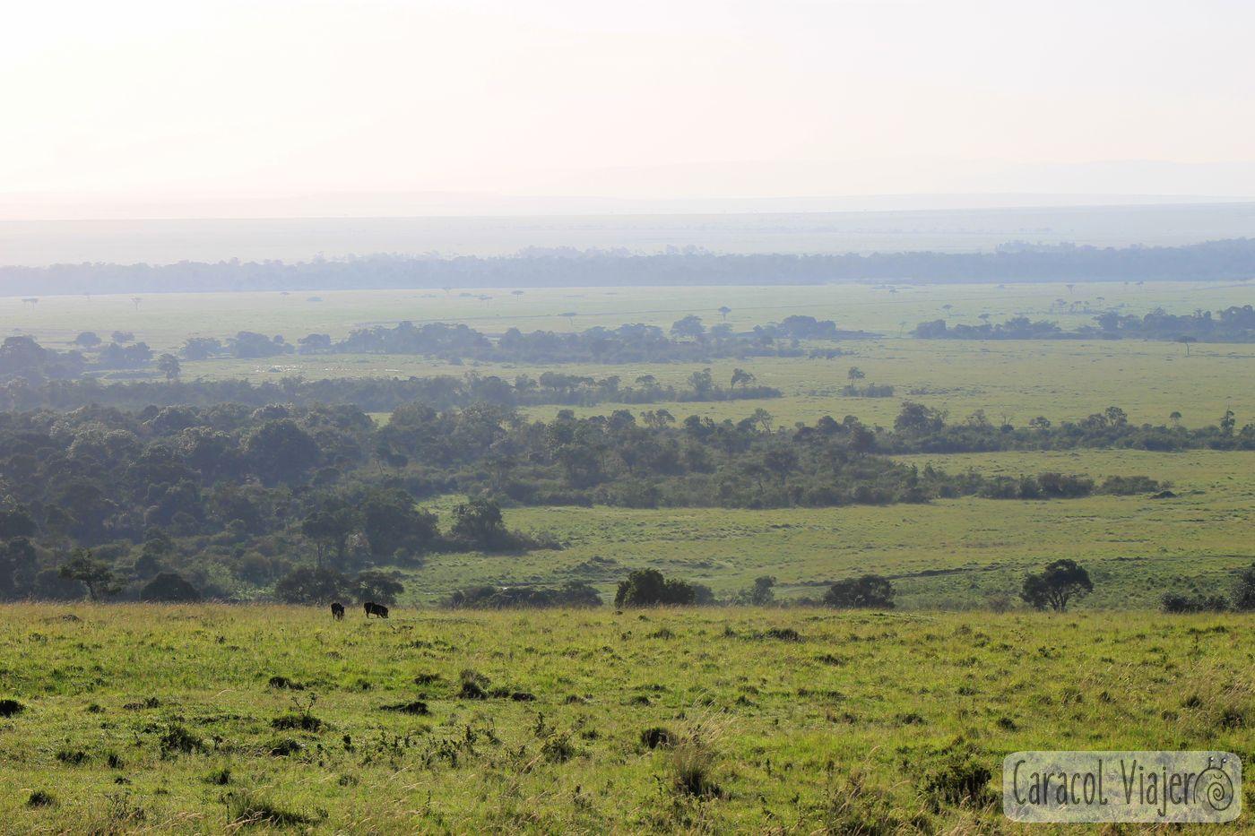 Africa, Kenia - Masai Mara