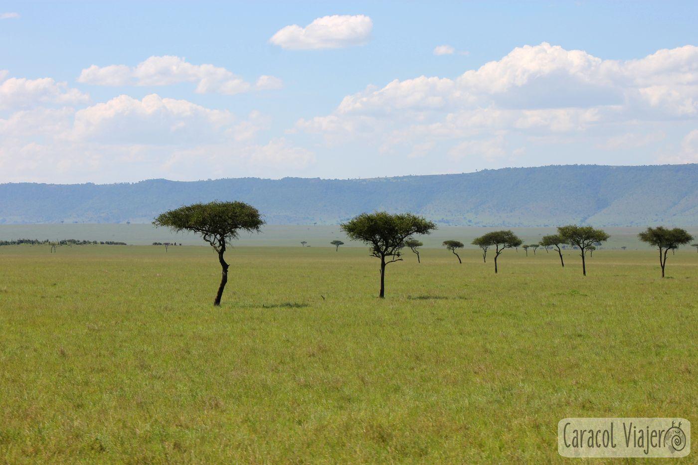 Kenia, Masai Mara