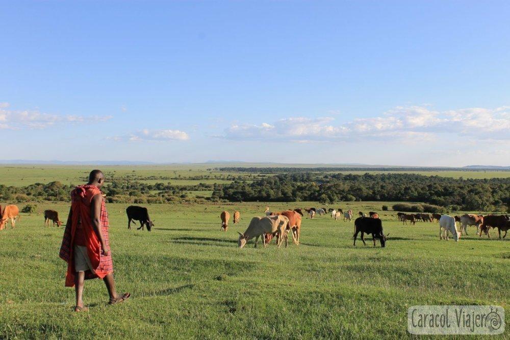 Masai Mara, Kenia