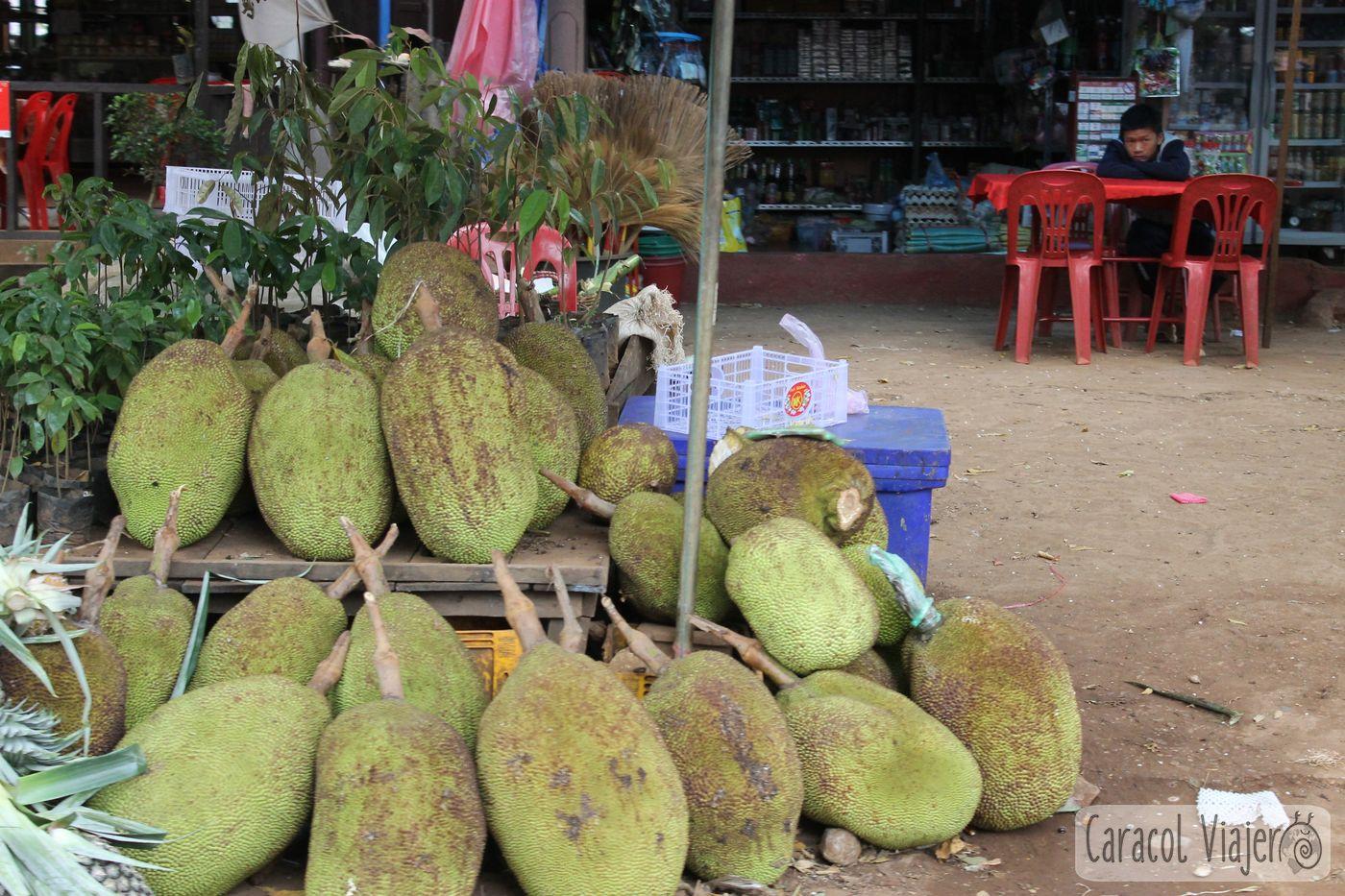 Jaca en Laos