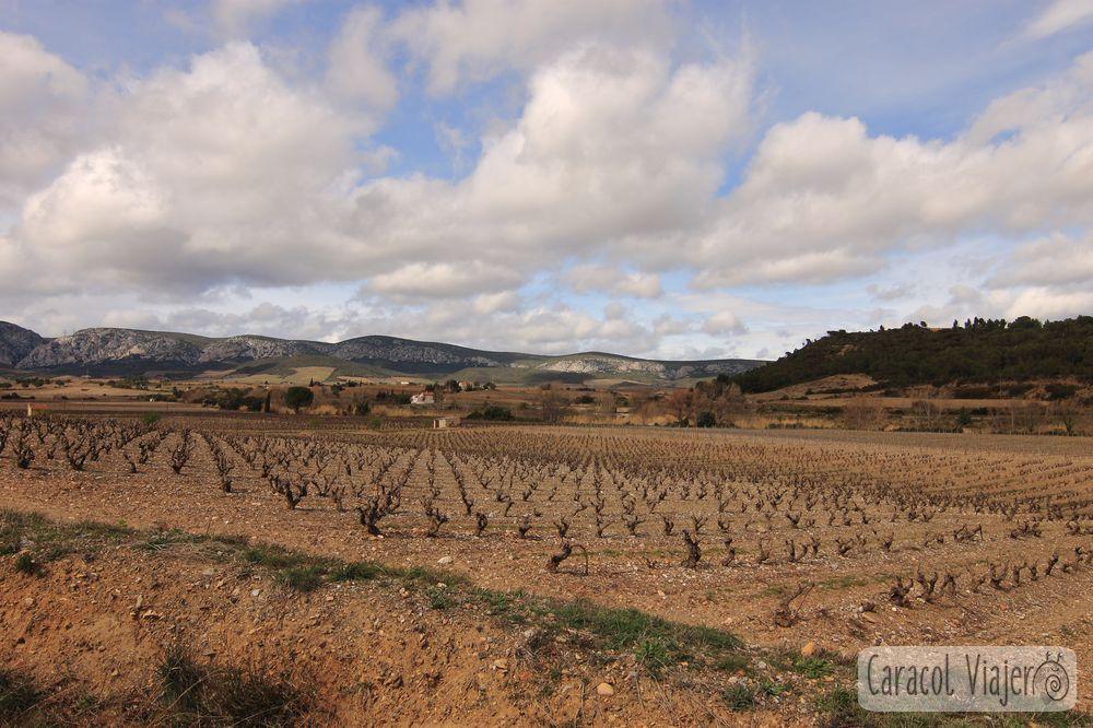 Maury y sus vinos en el sur de Francia