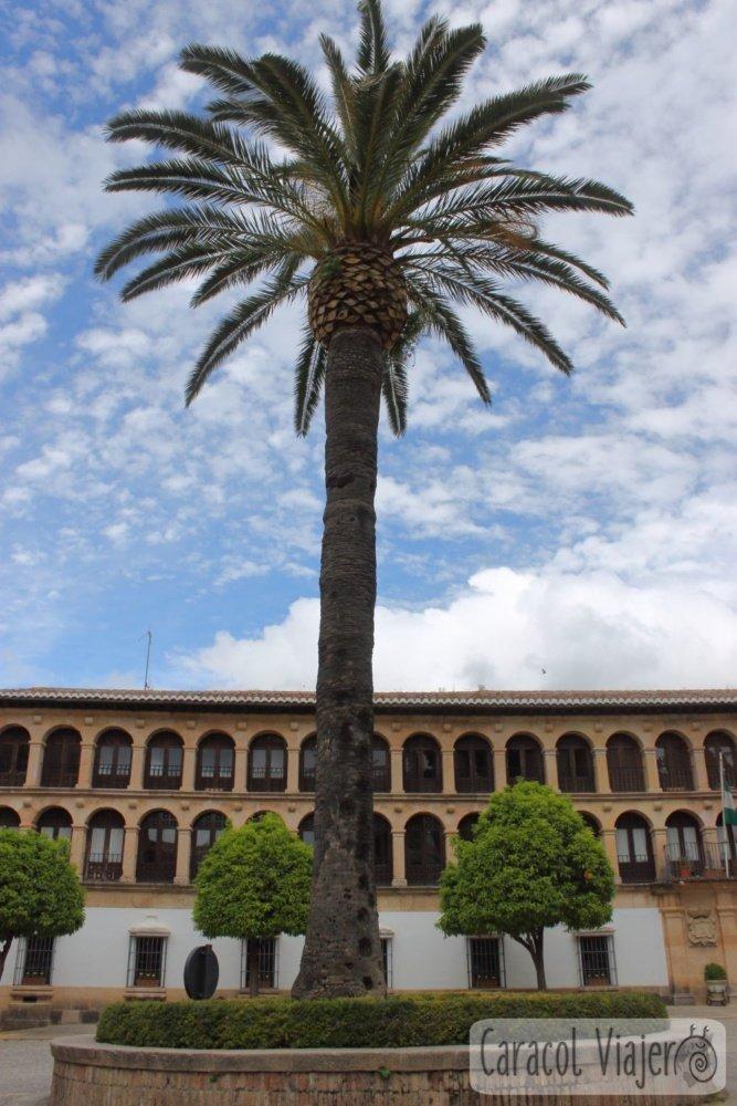 Ronda ayuntamiento