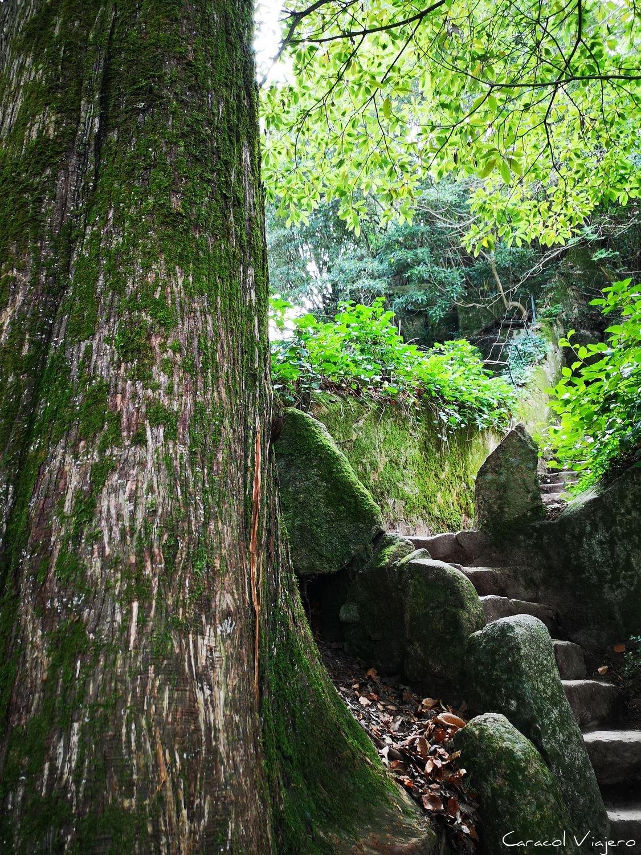 Regaleira árbol