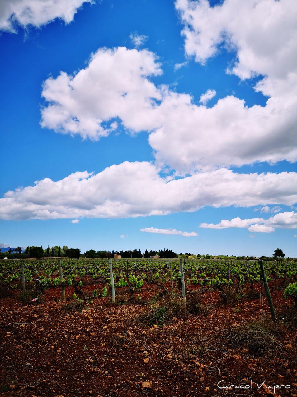 Pla de Mallorca vinos