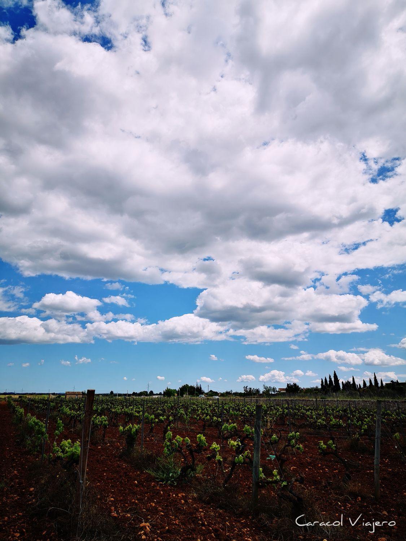 Viñedos ruta por Mallorca