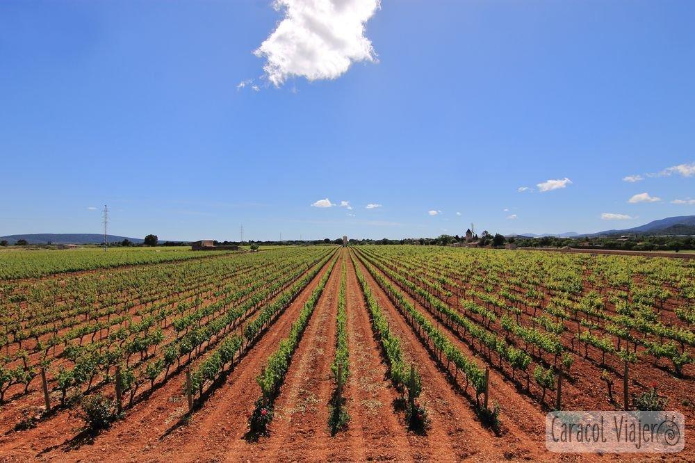Bodegas ruta del vino en Mallorca Ferrer