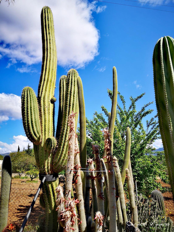 Ramanyà bodegas - cactus