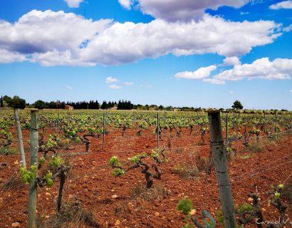 Ruta del vino en Mallorca – Enoturismo