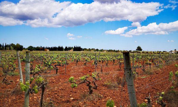 Enoturismo: ruta del vino en Mallorca
