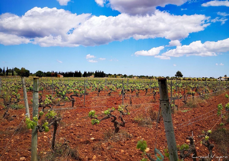 Ruta del vino en Mallorca - enoturismo