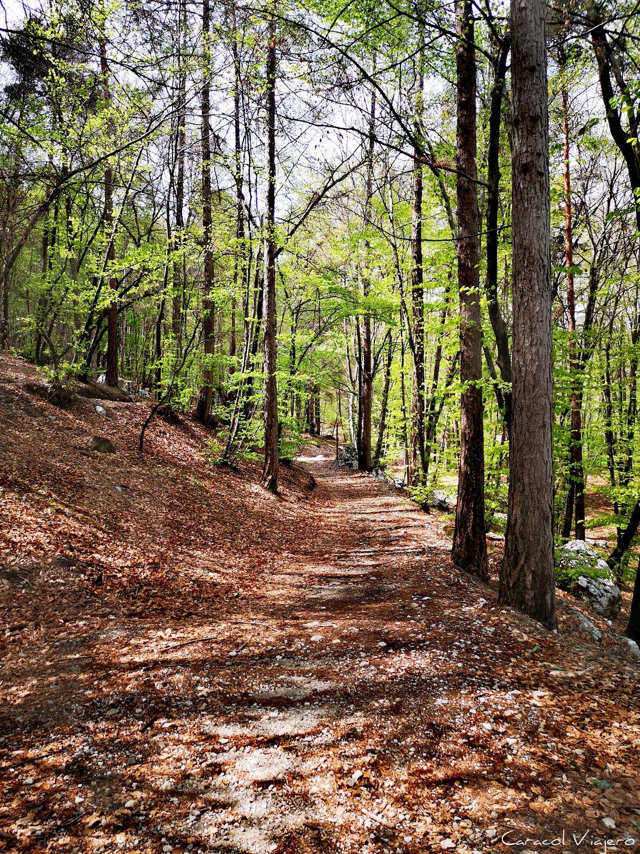 Excursiones en Riva del Garda: bosque