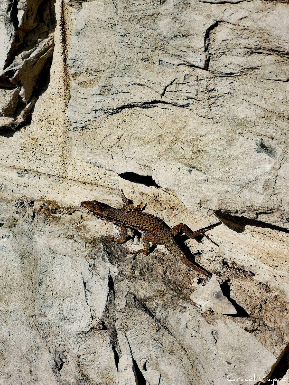 Excursiones en Riva del Garda: lagartijas