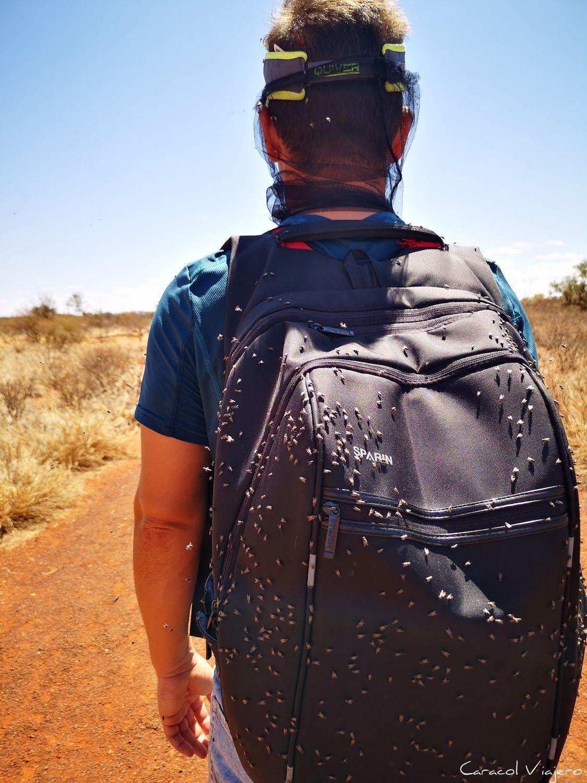 Uluru moscas