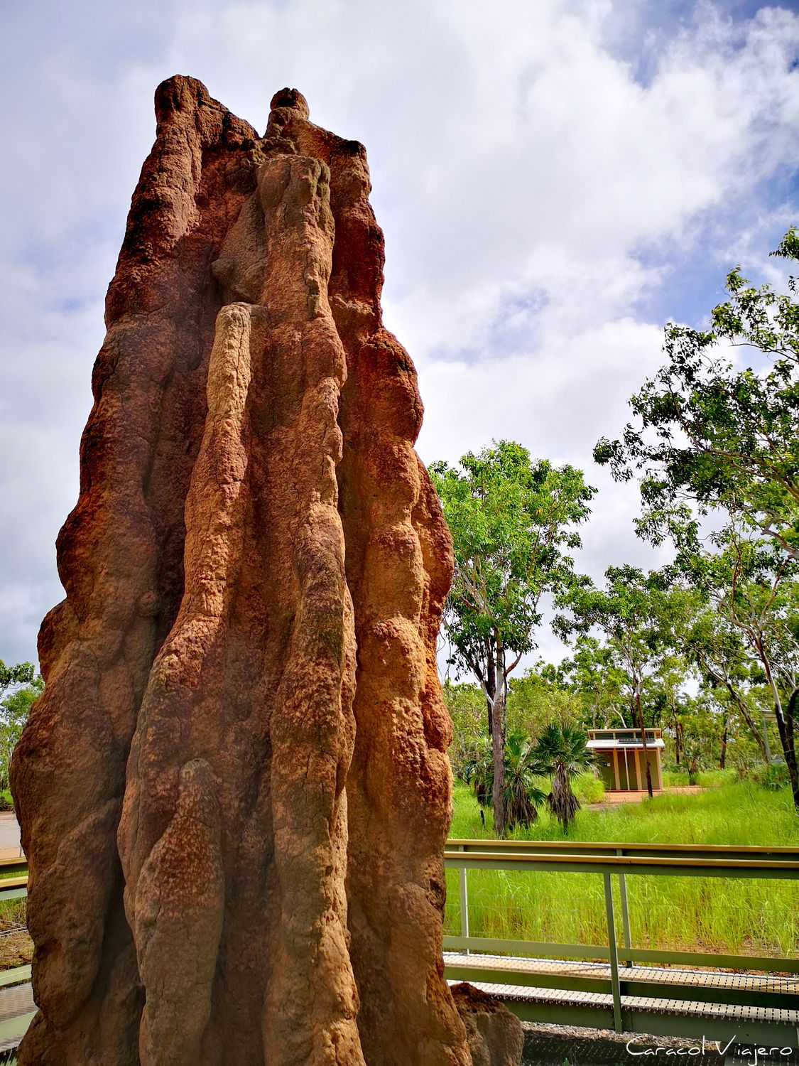 Termite Mound en Litchfield